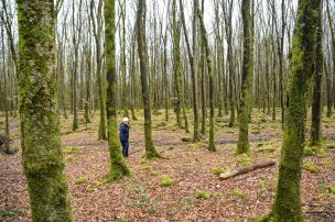 Mooghaun Woods