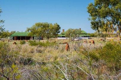 Vista del prat que rodeja el telègraf i els nius de termites que es formen al llarg del desert